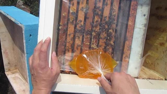 Правильное кормление пчел