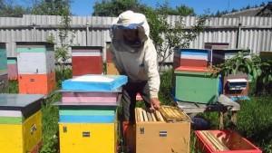 Как закормить пчел в зиму: полезные советы для каждого пчеловода