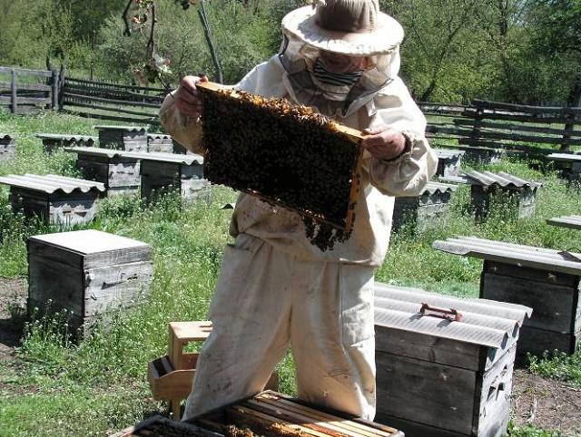 Как правильно закармливать пчел к зиме