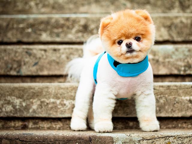 какую собаку выбрать для частного дома