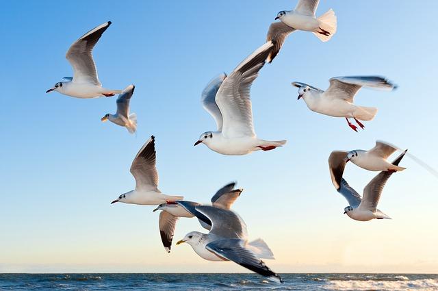почему птицы летают ответ