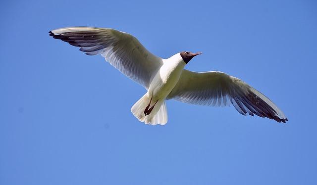 почему птицы летают клином