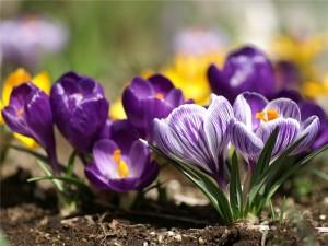 Какие цветы пересаживают осенью: прочитайте сейчас все советы в одной статье