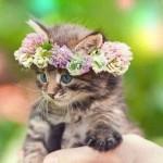 Как выбрать себе кота: что важно знать каждому из вас, чтобы найти нового друга для семьи