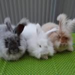 Клетки для кроликов своими руками: вы сделаете ее самостоятельно