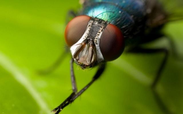 мухи кусают осень