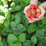 Когда осенью пересаживать ягоды: узнайте невероятно полезные советы