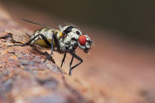почему мухи осенью начинают кусаться