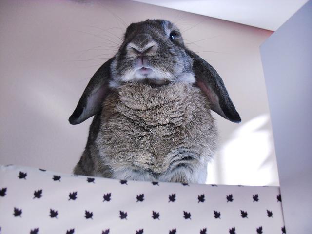 Клетка для домашнего кролика своими руками