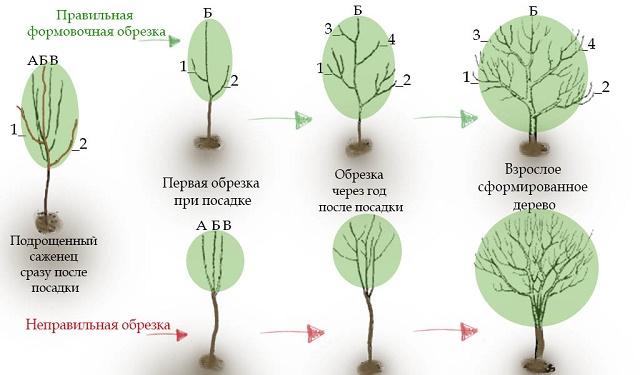 как правильно сажать фруктовые деревья осенью