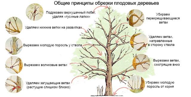 посадка фруктовых деревьев осенью видео