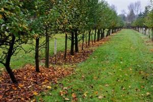 Как правильно посадить осенью фруктовые деревья: узнайте все важные рекомендации