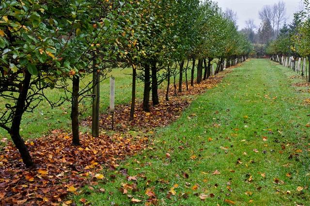 как правильно посадить саженцы фруктовых деревьев осенью