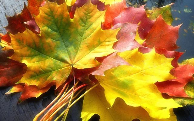 поделки из осенних цветов своими руками
