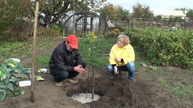 когда посадить осенью фруктовые деревья