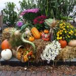 Что Делать Осенью На Даче: Главные Рекомендации Бывалых Дачников