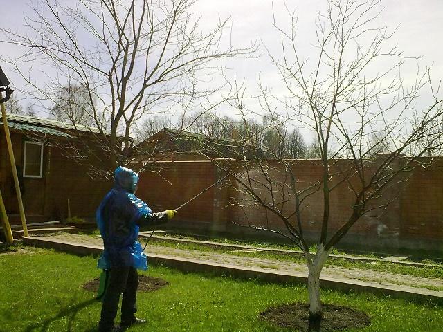 что посадить на даче осенью под зиму