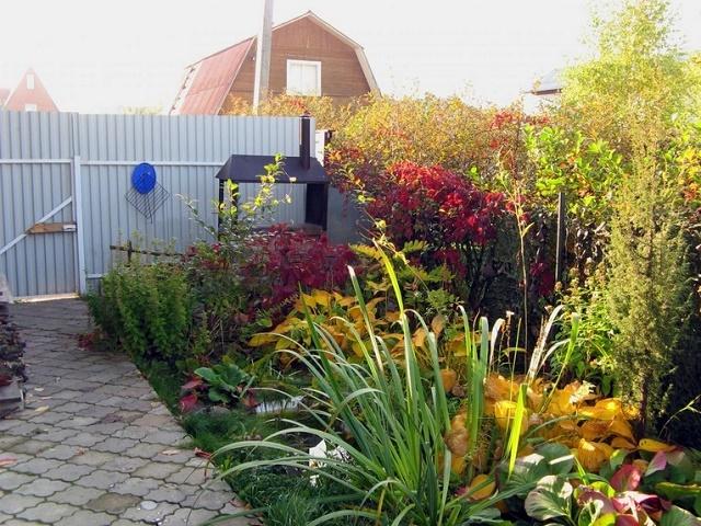 какие цветы сажают осенью на даче