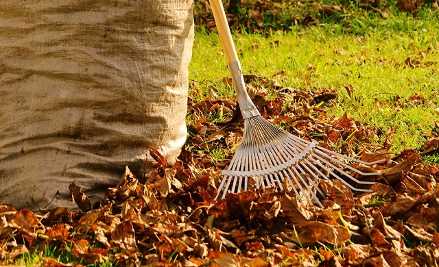 что делать с травой на даче осенью