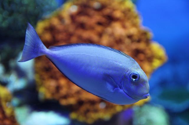 как правильно ухаживать за рыбками в аквариуме