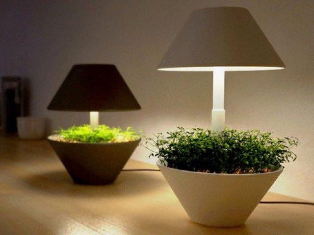 Выращивание цветов зимой в домашних условиях