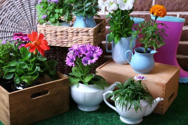как поливать комнатные растения зимой