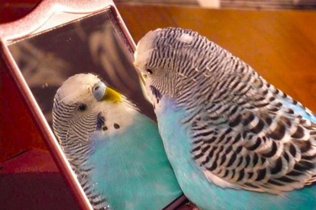 сделать клетку для попугаев своими руками
