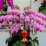 Какие цветы цветут круглый год: сделайте приятную покупку для дома