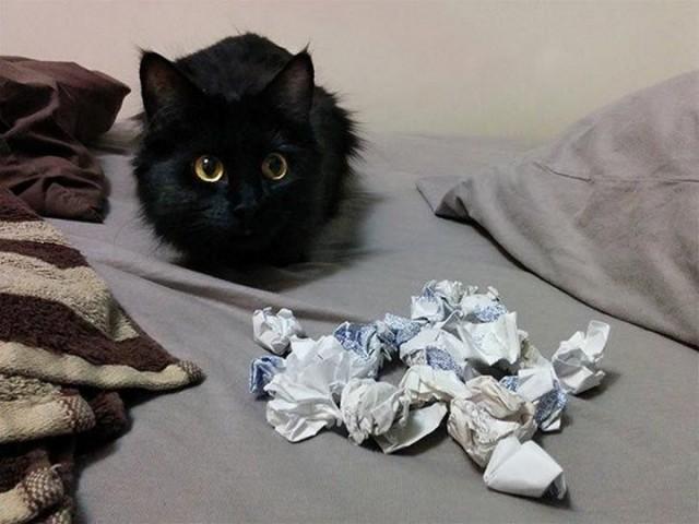 Скомканная бумага для кота
