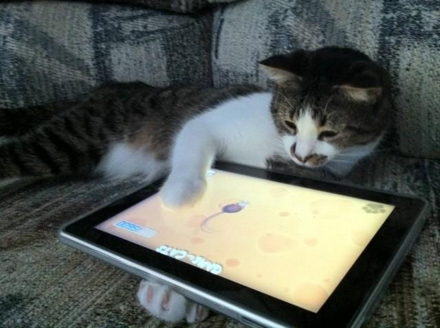 игры на планшете для котов