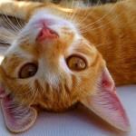 А вы видели 25 вещей, от которых ваша кошка будет в восторге?