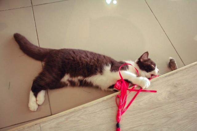 Веревка с ленточками