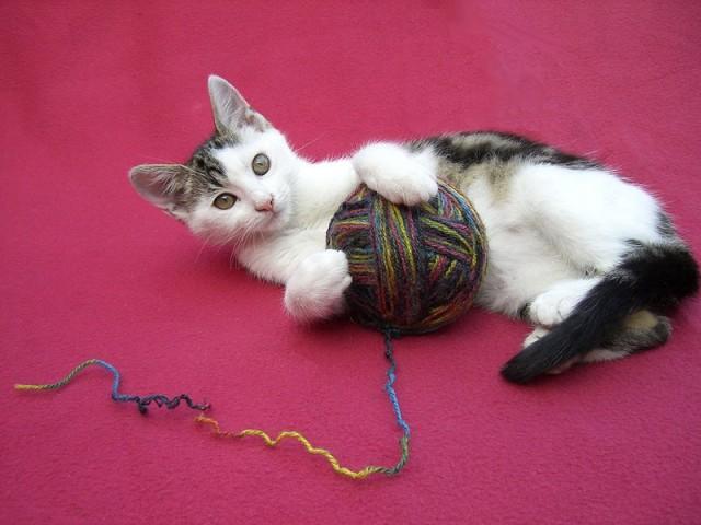 игрушки для котов своими руками