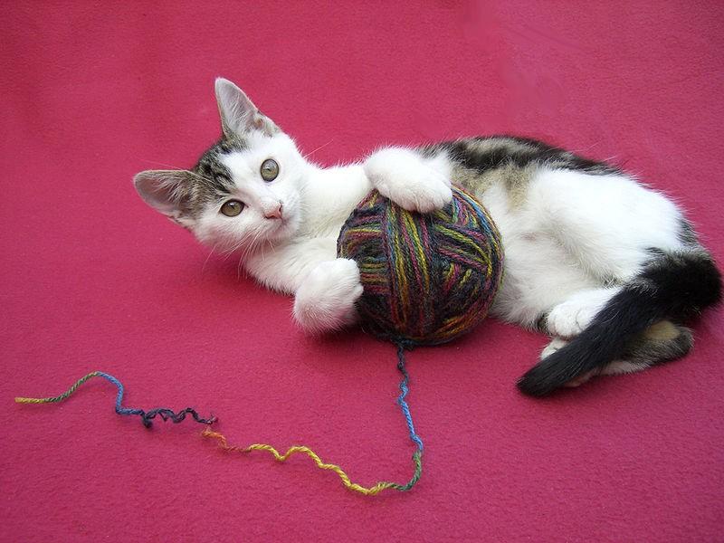 igrivaya-koshka Игрушки для котят своими руками в домашних условиях, как сделать интересную для кошки игрушку