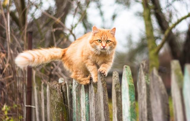 Почему у кота хвост