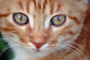 Интересно….а какое значение имеет хвост для кота…задумывались?