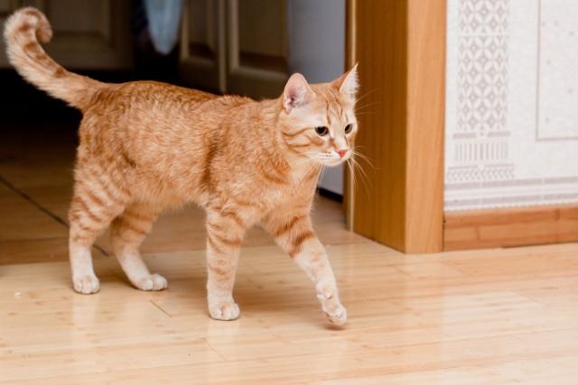 Почему кот дергает хвостом