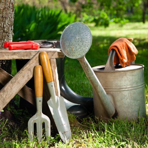 Что сделать на огороде весной