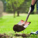 Узнайте, какие посадить фруктовые деревья и кустарники весной!