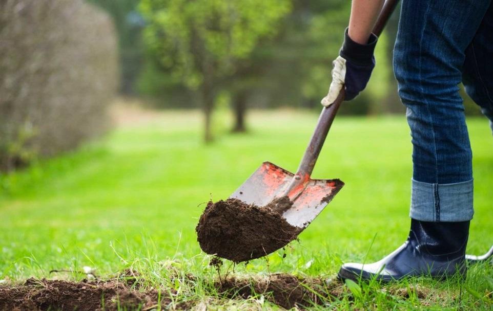 Какие посадить фруктовые деревья
