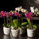 Почему орхидея вянет: 5 причин и способов устранения проблемы