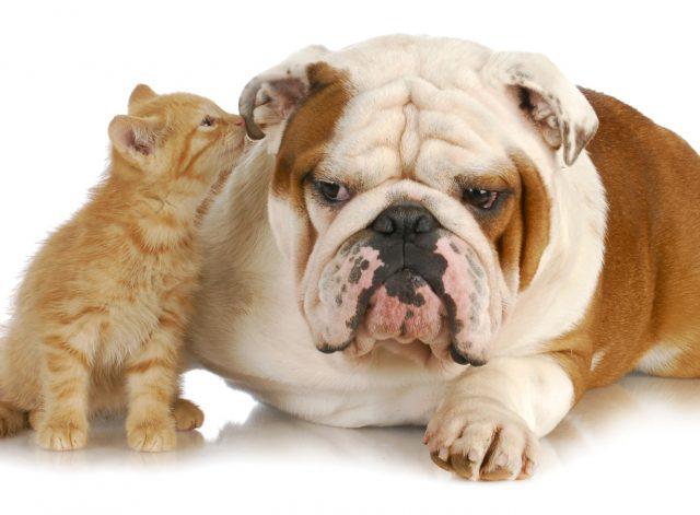 как разговаривают животные