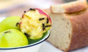 Что нужно знать про укусы насекомых: советы экспертов на лето