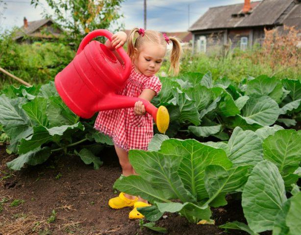 что надо для огорода на осень