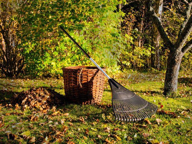 что делать осенью