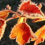 Первые Осенние Заморозки: Чего Нужно Бояться Дачнику?