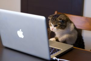 Правила общения в сети или тонкости цифрового этикета