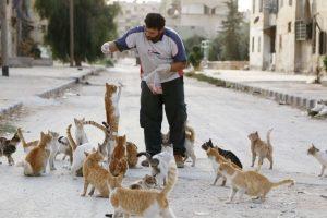 Как организовать «пункт кормления» для уличных кошек?