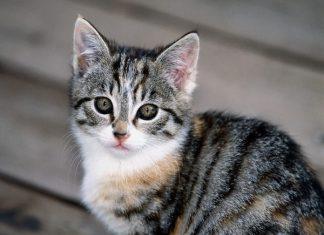 Какое имя выбрать для кота: примеры и рекомендации