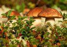 Почему грибы выделили в самостоятельное царство?